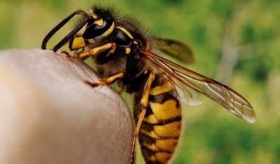 شہد کی مکھی کاٹ لے تو کیا کرنا چاہیئے ؟