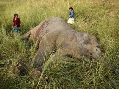 بھارت، ٹرین سے ٹکرا کر نایاب نسل کے دو ہاتھی ہلاک
