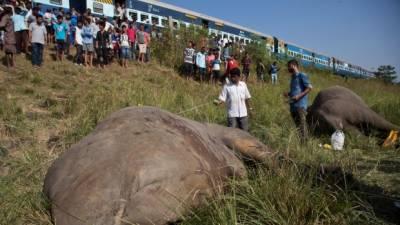 بھارت میں ٹرین کے ساتھ تصادم ، نایاب نسل کے دو ہاتھی ہلاک