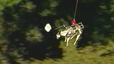 کیلیفورنیا،کھائی میں پھنسے گھوڑے کو ہیلی کاپٹر سے بچا لیا گیا