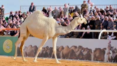 سعودی عرب میں کیمل فیسٹول میں 2بھارتی بہنوں کی خصوصی شرکت