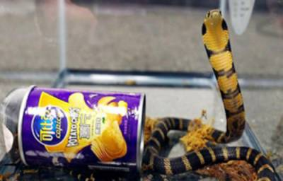 امریکہ میں چپس کے ڈبے میں زندہ سانپوں کو سمگل کرنیوالے شخص کو گرفتار کرلیا گیا
