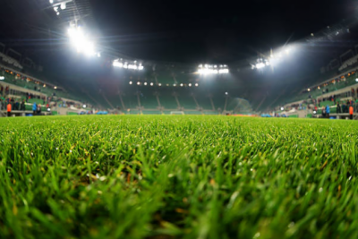 فٹ بال ورلڈ کپ میں ٹڈیاں سٹیڈیمز پر حملہ آور ہو سکتیں ہیں ، روسی وزیر زراعت