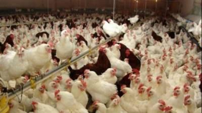 سعودی عرب نے انڈیا کی مرغیوں اور انڈوں پر پابندی لگا دی