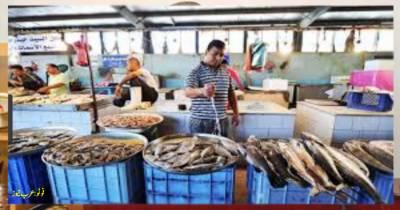 جازان کی مچھلی مارکیٹ پر غیر ملکی شہری حاوی، سعودی شہری پریشان