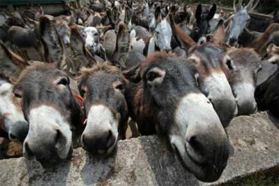 خیبر پختونخوا، گدھوں کی افزائش کیلئے جامع پالیسی متعارف کرانے کا فیصلہ