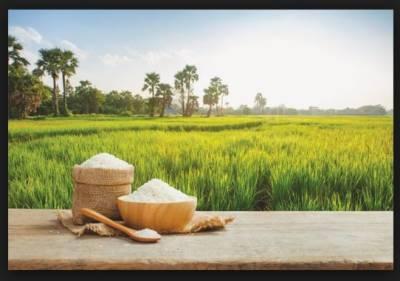 چاول کی ملکی برآمدات 2 ارب ڈالر سے تجاوز کر گئیں