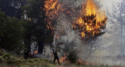 یونان کے جنگل میں آگ بھڑک اٹھی،50افراد ہلاک