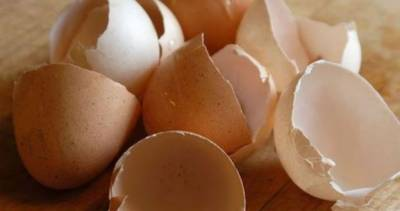 انڈے کا چھلکا کھانے کے حیران کن فوائد سامنے آگئے