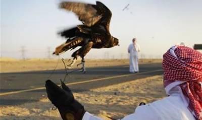 عرب شاہی خاندانوں کو تلور کے شکار کیلئے مزید 12 اجازت نامے جاری