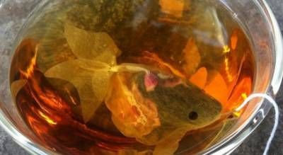 مچھلی کھانے پر ایک شخص کو سزا اور بھاری جرمانہ عائد