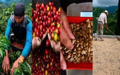 دنیا بھر میں کافی کے شوقین افراد کی تعداد بڑھنے لگی