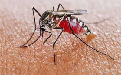 دنیابھر سے ملیریا کا مکمل خاتمہ ممکن ہوگیا