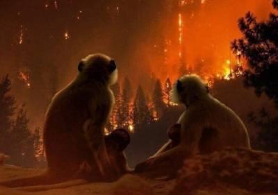 ایمیزون کے جنگلات میں لگی آگ بے قابو