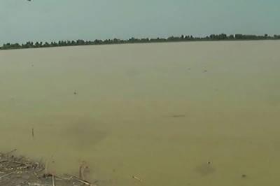 راجن پور، کوہ سلیمان کے برساتی ندی نالوں میں طغیانی