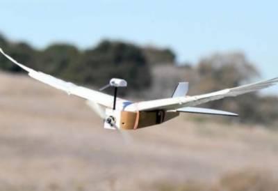 بازو موڑ کر پرواز کرنے والا دنیا کا پہلا کبوترروبوٹ تیار
