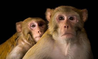 بھارت میں بندر کو عمر قید کی سزا سنا دی گئی