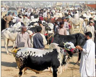 'مویشی منڈیوں کے اوقات کار صبح 6 سے شام 7 بجے تک ہوں گے'