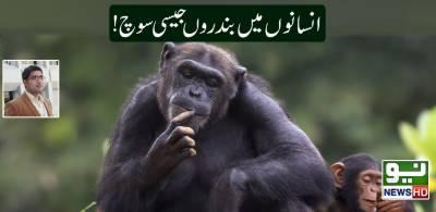 انسانوں میں بندروں جیسی سوچ!